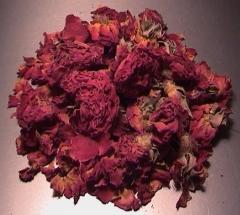 Rosenknospen rot - Liebe